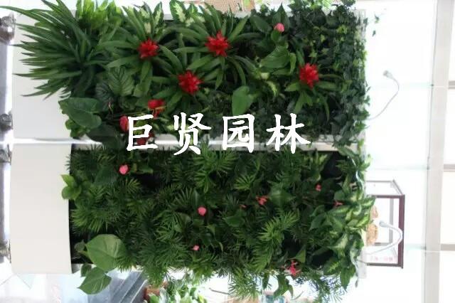 上海舞台花卉出租公司