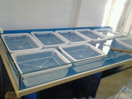 酒店海鲜缸_上海松江区专业定做酒店海鲜池 酒店鱼缸制冷设备