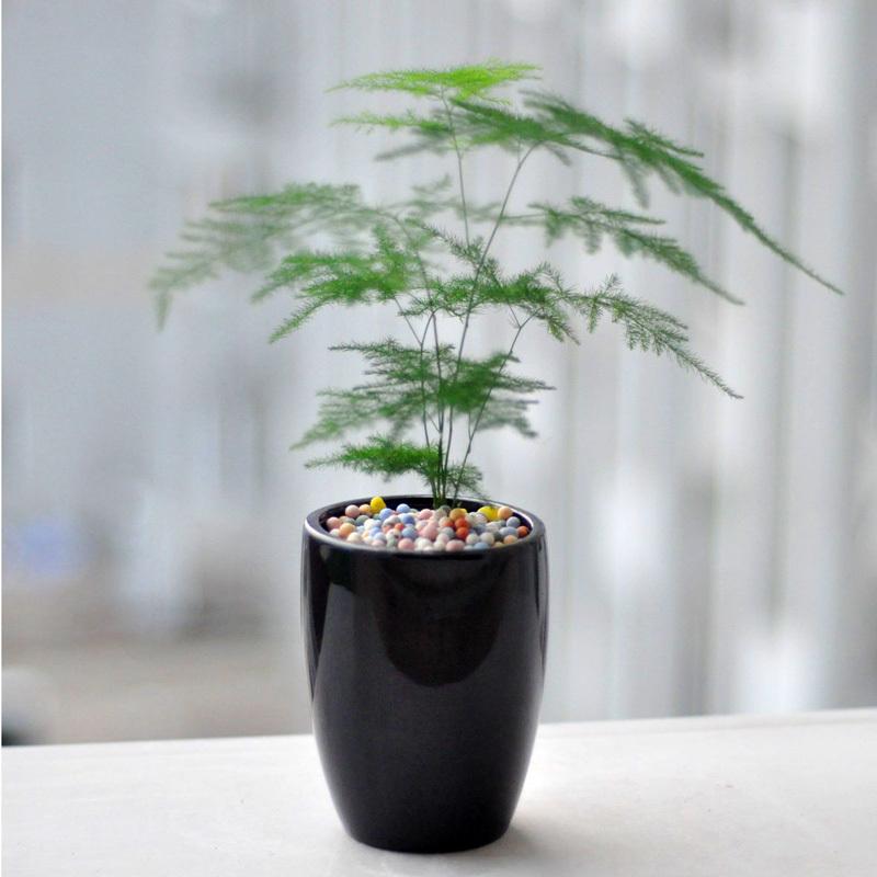 上海嘉定区办公室绿化植物花卉租赁 景林园艺