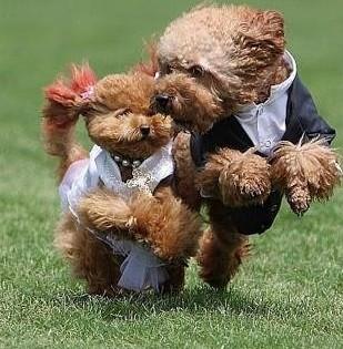 狗狗吃什么狗粮好,能美毛的狗粮有木有_狗狗吃狗粮便便发黑_多大的狗狗吃泡狗粮