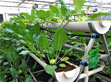 植物工厂的共同特征是:有固定
