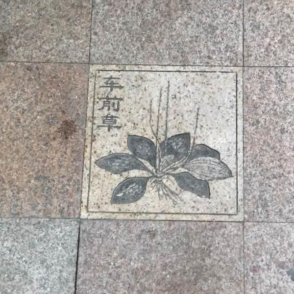 地面大理石雕刻 庭院地面石材雕刻 别墅庭院地面雕刻 联系电话: 公