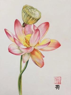 彩铅花朵步骤图解