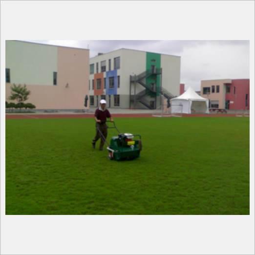 宝安后瑞专业草坪维护管养