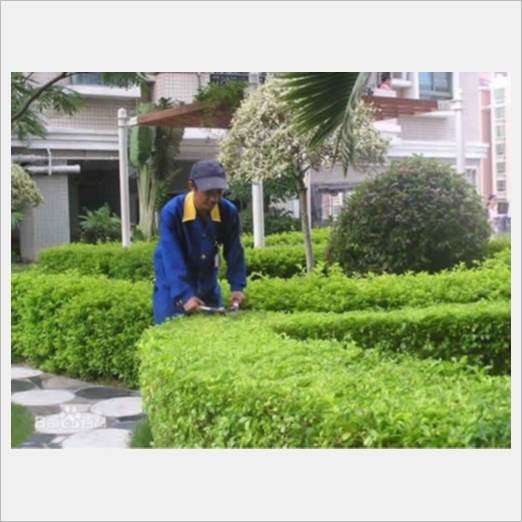 深圳优惠的绿植植物租赁服务商