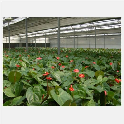 深圳办公室植物租摆,花卉租赁,绿化养护业务南韵竹风专业为您