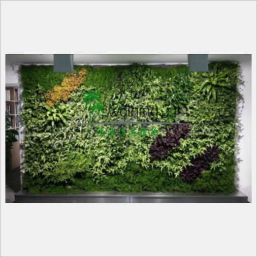 深圳优惠的草皮绿化维护服务商