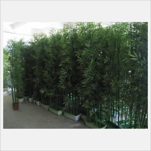深圳优惠的绿色植物租赁租摆服务商