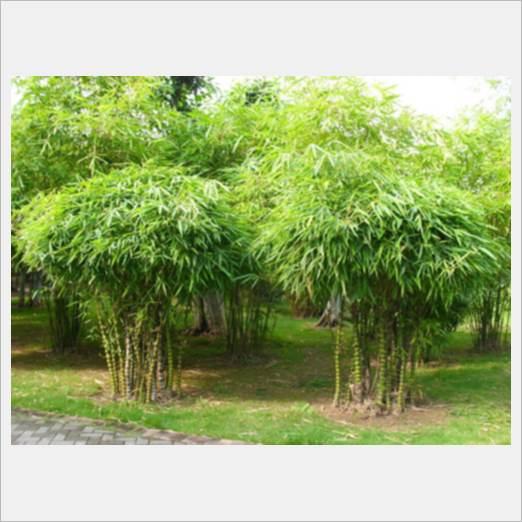 深圳优惠的绿植植物租摆租赁服务商