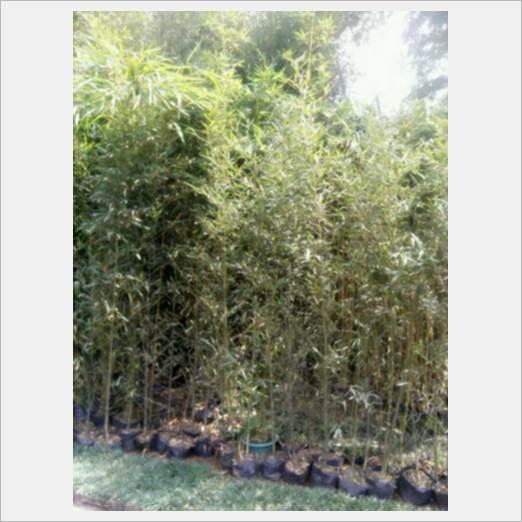 深圳优惠的绿植植物租摆服务商