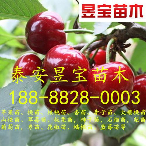 丰香草莓苗批发价格、丰香草莓苗-山东泰安昱宝草莓苗基地