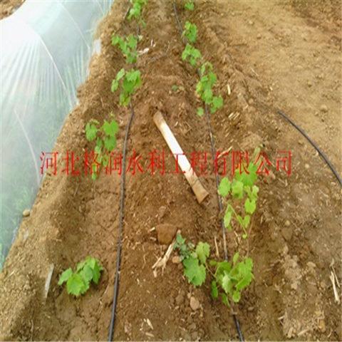 农业专用节水滴灌管 贴片式节水滴灌管 迷宫式滴灌带