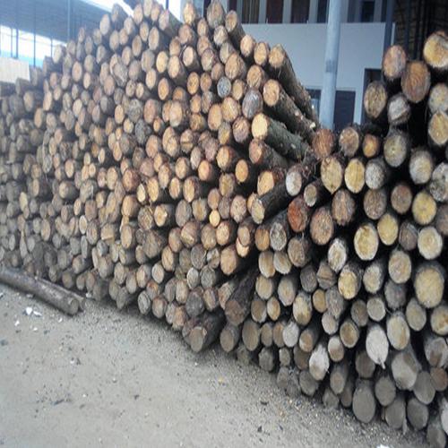 松木桩是怎么施工的