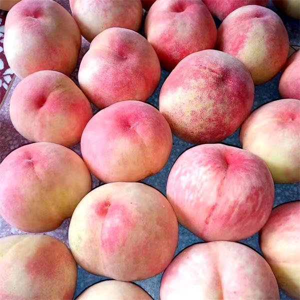 �o�a�山水蜜桃一般�自鲁墒欤渴裁�r候上市?多少�X一斤?