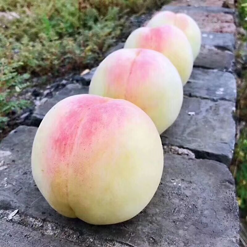 �o�a�山水蜜桃甜不甜