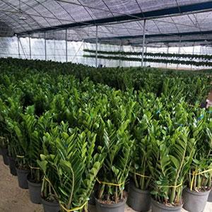 绿植养护需要注意哪些方面