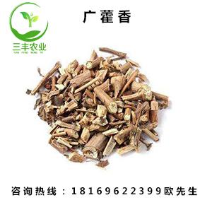 上海广藿香种植基地-三丰交货快,寿命长