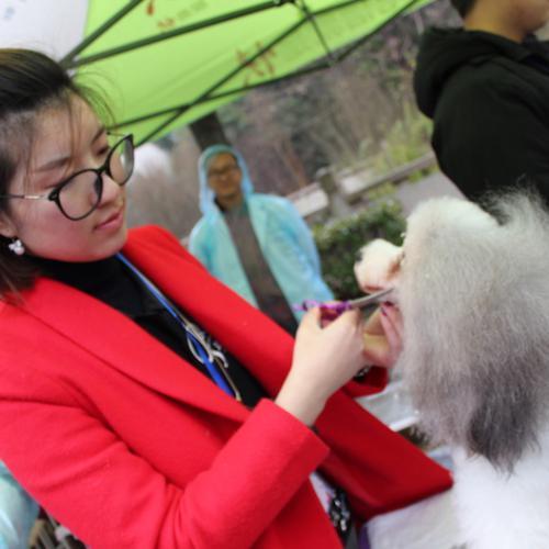 宠物狗常见牙齿口腔疾病,武进武进经济开发区湖塘本森宠物医院告