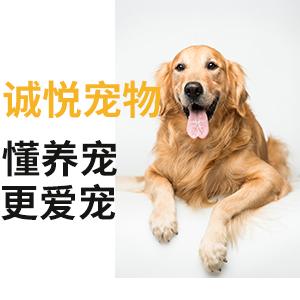 重庆宠物店寄养哪家安心,诚悦宠物宠爱有加