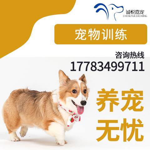 重庆专业训犬,专业指导你怎么给狗梳毛养成每天梳毛5分钟的习惯详